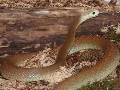 这种蛇头小身肥,样子虽丑,但喜欢捕食各种害虫和老鼠.