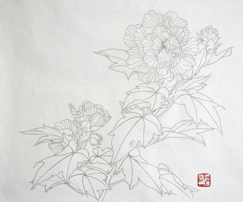 工笔花卉白描练习(芙蓉花)