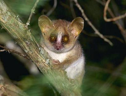 世界12种濒临灭绝动物(2)