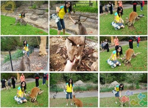 可爱的动物_悉尼鱼_新浪博客