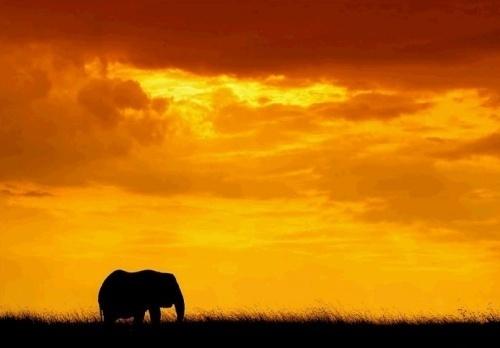 美丽的非洲