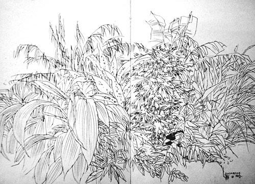 热带雨林速写二幅