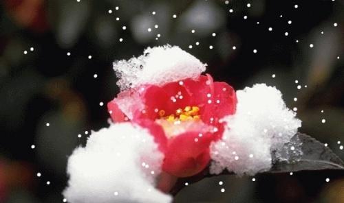 雪紫冰雨的头像