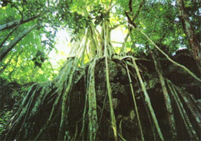 木本植物茎的基本结构示意图.