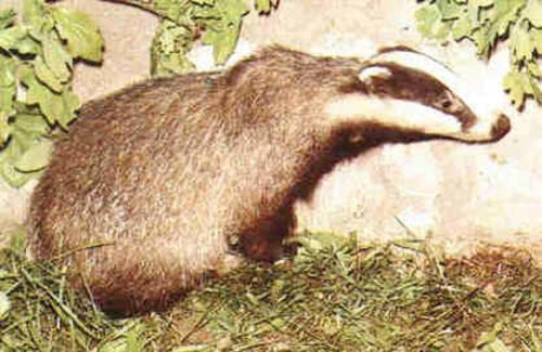动物睡觉姿势2-冰河期的春天-搜狐博客
